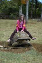 В зоопарке можно покатать на черепахе